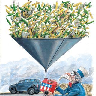 Corn in tank